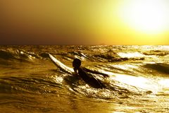 Surfer at sea. A young male surfer paddling throw the surf royalty free stock photography