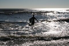 Surfer Silhouette. Surfer with surf board wades into the ocean looking for a perfect wave Royalty Free Stock Photography