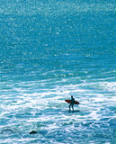 Surfer Silhouette. Ocean water background with silhouette of a surfer Royalty Free Stock Images