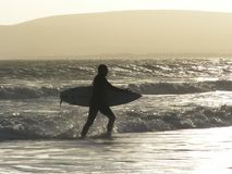 Surfer stepping out of ocean. Surfer coming out of the sea at the end of the day Stock Photos