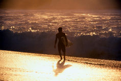 Surfer at Sunset Stock Image