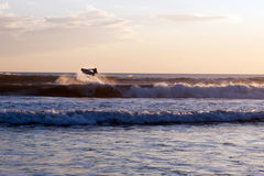 Surfer at sunset in the ocean Royalty Free Stock Photography