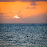 Surfer Sunset Silhouette. Silhouette of a surfer at sunset on the north shore of Oahu, Hawaii stock photo