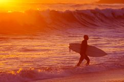 Surfer at Sunset. Silhouette of a surfer leaving the water at warm sunset light royalty free stock photos