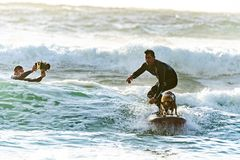 Surfer Surfing with his Surfer Dog royalty free stock image
