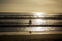 Surfer to enter the water at sunset, Caparica Portugal Stock Photos