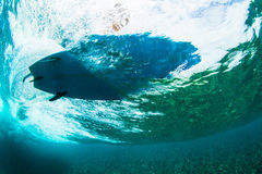 Surfer on tropical wave underwater vision Stock Photos