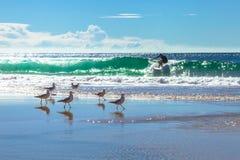 Surfer und Seemöwen Lizenzfreies Stockbild