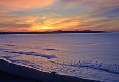 Surfer und Vögel auf Strand bei Sonnenaufgang Stockfotos