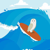 Surfer. Unusual. On the night awake  in the sea. Chicken night on a surfboard this story Stock Photos
