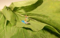 Surfer végétal Images stock