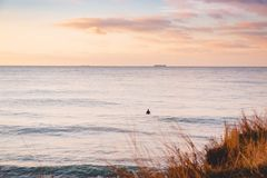 Surfer waiting wave in ocean. Landscape with waves and sunrise colors. Surfer waiting wave in ocean. Landscape with waves and sunrise Royalty Free Stock Photo