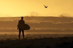 Surfer walking down the beach at sunset. While huge waves crash in the ocean Royalty Free Stock Photo