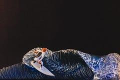 Surferhandwerkskeks stockbilder
