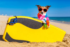 Surferhond stock fotografie