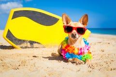 Surferhund stockfotos