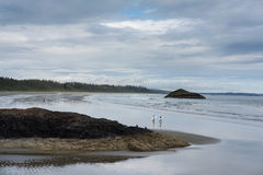 Surfers σε Tofino, Καναδάς στοκ φωτογραφία με δικαίωμα ελεύθερης χρήσης