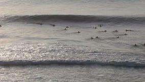 Surfers στα κύματα το βράδυ στην εναέρια άποψη ηλιοβασιλέματος απόθεμα βίντεο