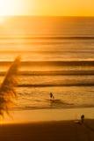 Surfers στην παραλία στο ηλιοβασίλεμα Στοκ Εικόνες