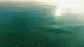 Surfers στο νερό του Ειρηνικού Ωκεανού φιλμ μικρού μήκους