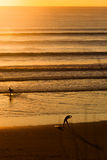 Surfers on beach at sunset Royalty Free Stock Photography