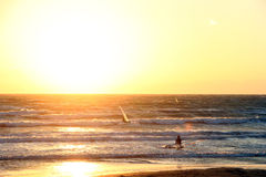 Surfers in beautiful sunset Stock Photos