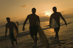 Surfers Carrying Surfboards Out Of Surf At Sunset. Full length of three surfers carrying surfboards out of surf at sunset Stock Photo