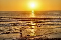 Surfers Coming in at Sunset Stock Photo