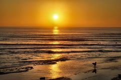 Surfers Coming in at Sunset Royalty Free Stock Photography