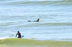 Surfers dans la plage Images stock