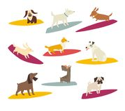 Surfers dog, vector cartoon illustrations. Card with funny dog. Dogs breeds on surfboard. Isolated on white stock illustration