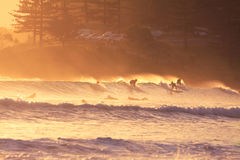 Surfers. Group of surfers enjoy morning swell in the morning (Gold Coast, QLD, Australia Royalty Free Stock Photos