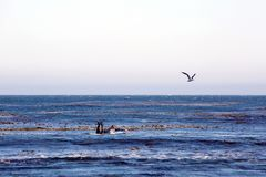 Surfers in Los Angeles area. A view to the surfers in Malibu, California, USA Royalty Free Stock Photos