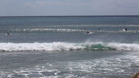 Surfers in Makaha Bay. Fun and recreation in Oahu, Hawaii stock video