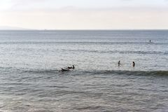 Surfers in Malibu beach, waiting for the waves in summer time in California.  Royalty Free Stock Photos
