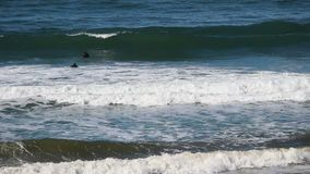 Surfers Northern California Swimming Out Through Waves stock video footage