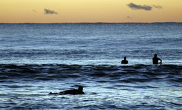 Surfers Paddling Out Royalty Free Stock Photo