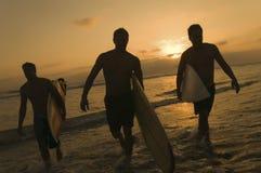 Surfers portant des planches de surf hors du ressac au coucher du soleil Photo stock
