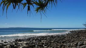 Surfers ride waves at the famous point break at noosa heads. In queensland, australia stock video