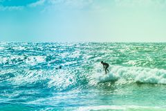 Surfers riding some waves on the sea. Extreme surfers riding some waves on the sea in France Royalty Free Stock Photo