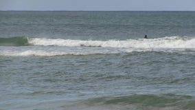 Surfers seeking early morning waves, Palm Beach, Queensland Australia. stock video footage