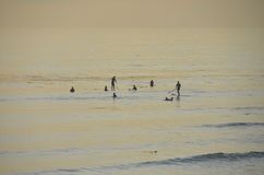 Surfers in sunset Royalty Free Stock Images