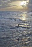 Surfers Wait For Hurricane Sandy Waves at Sunset Stock Image