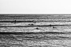 Surfers waiting Royalty Free Stock Image