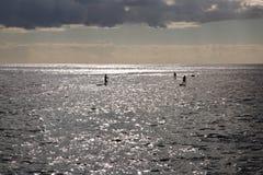 surfiarze 3 Zdjęcie Royalty Free