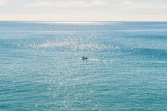 Surfing at Daytime. Stock Images