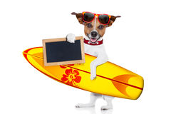 Surfing dog Stock Photos