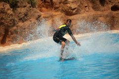 Surfing with dolphin. Man surfing with dolphin during show in Loro Parque in Tenerife, Spain royalty free stock images