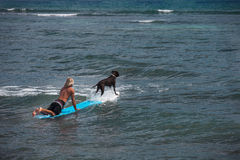 Surfing with Man's Best Friend. Dog on a surfboard with a Blonde Surfer Paddeling Stock Photos