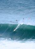 Surfing monsters, Waimea Bay, Hawaii royalty free stock image
